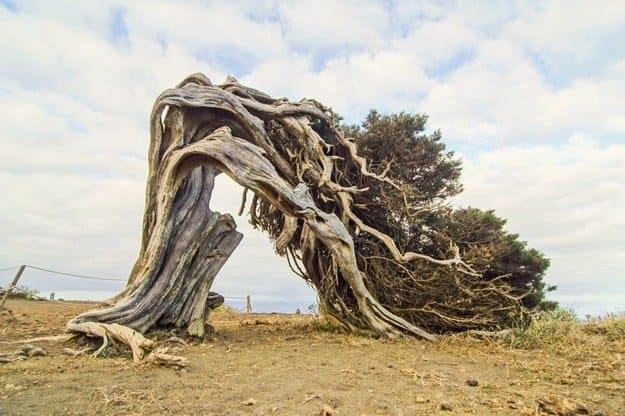 Juniper Tree Shelter | The DIY Survival Shelters You Need To Know To Survive Anything