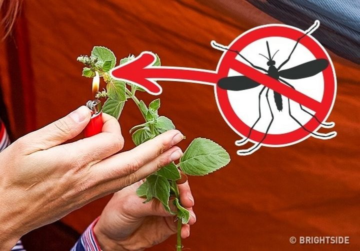 11 Wilderness Survival Tips - Burn herbstohelp driveawaymosquitoes, flies, and other insects.